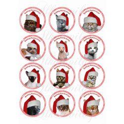 Cicák karikákban karácsonyi sapikban
