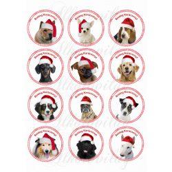 Kutyuskák karikákban karácsonyi sapikban