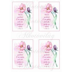 Minden gondotokat... bibliai idézet rózsaszín tulipánnal 4 db