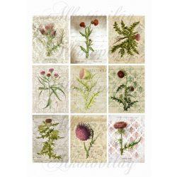 Mezei növények 6x8 cm-es kártyákon