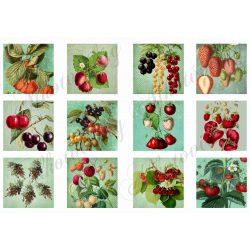 Piros gyümölcsös kártyák 6x6cm