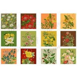 Szépséges virágok négyzetekben 6x6cm