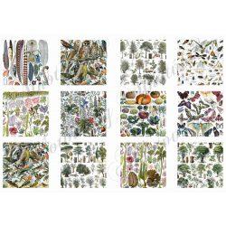 Állatos és növényes kártyák vegyesen 6x6cm
