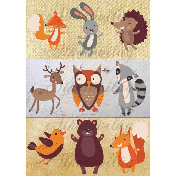 Erdei állatok textúrákon
