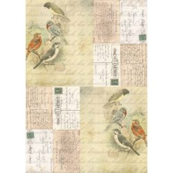 Kollázs madarakkal 2