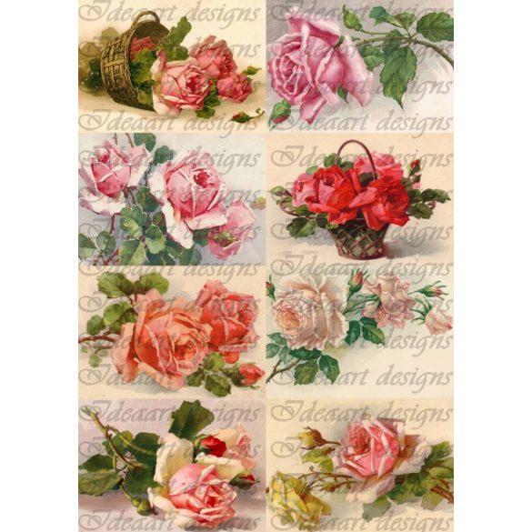 Rózsák emlékeinkben