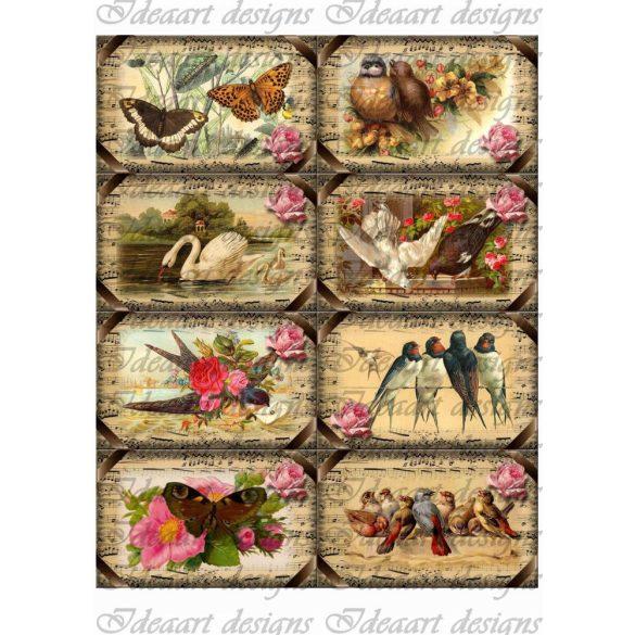Szabadon színesben- vintage kártyák