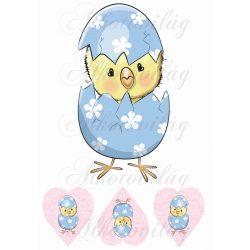 Kiscsibe kék tojásban + 3 szívben