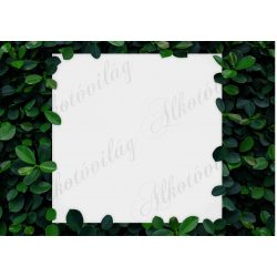 Fotóháttér apró levelű borostyánkerettel termékfotózáshoz