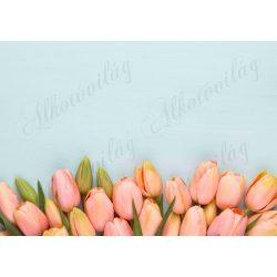 Fotóháttér barackszínű tulipánok halványkék háttérrel termékfotózáshoz