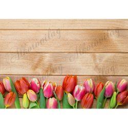Fotóháttér piros és pink tulipánokkal fa deszka háttérrel termékfotózáshoz