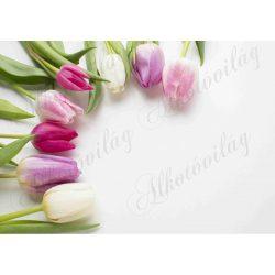 Fotóháttér színes tulipánokkal termékfotózáshoz